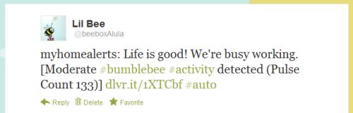 Bumblebee Tweet